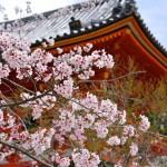 外国人観光客に人気の「日本の場所」