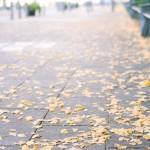 日本の公共の場所は「世界一」きれい